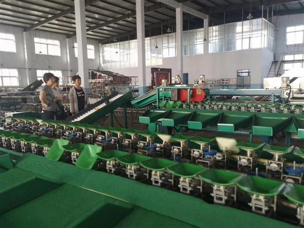 上海水果分果机多少钱一台 分选机选果机