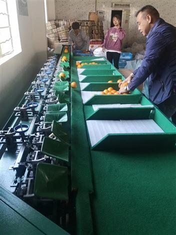 山西运城苹果分级机  提高工作效率