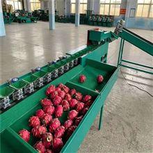 XGJ-Z-2小型安岳柠檬自动上果选果机生产厂家