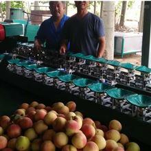 XGJ-SZZ莱山蜜桃选果机 提高品质工具泰安有卖的么