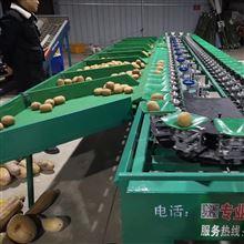 XGJ-SZ陕西武功徐香猕猴桃分拣机 自动化分级设备