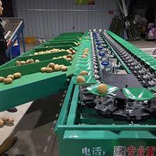 XGJ-SZ四川眉山猕猴桃分级机  分选速度快的设备