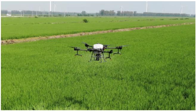 【DJI大疆农业】数字农业进行时:水稻精细管理,千亩增收18万