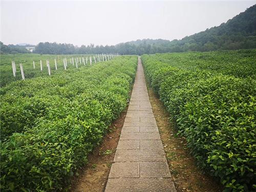 河南省农业机械技术中心关于调整茶树修剪机等农机购置补贴机具补贴额的公示