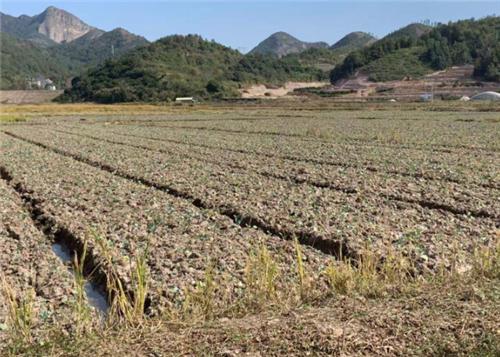 农业农村部印发《关于统筹利用撂荒地促进农业生产发展的指导意见》
