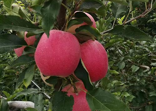 规模化果园、设施、养殖相关机具全部纳入补贴范围,陕西省2021年农机化工作要点来了!