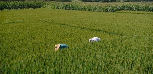 山西省农业农村厅关于下达2021年国家安排农田建设任务的通知