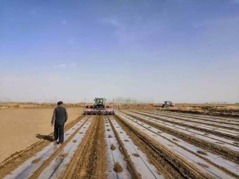 用事实击碎无稽之谈!司南导航助力新疆棉花生产全程全面机械化