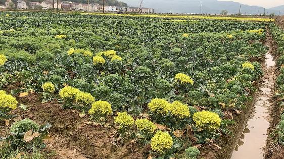 """三部门联合印发通知要求 加强化肥供应 全力保障""""三夏""""生产"""