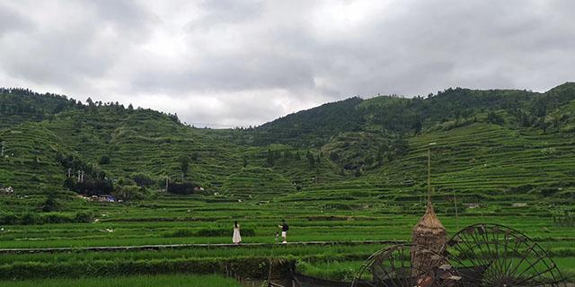 """农业农村部:丘陵山区农业生产""""无机可用""""问题得到一定程度缓解"""