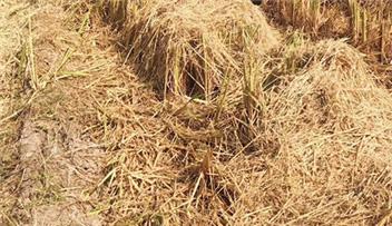 北京市关于暂停青贮切碎机农机购置补贴的通知