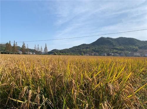 農業農村部部署全國農業科技現代化先行縣共建工作