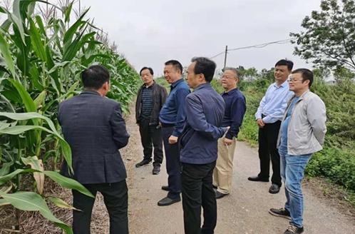 陕西省农业农村厅赴宝鸡市调研龙8化重点工作