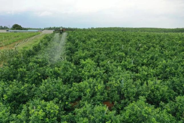 大疆农业:无人机如何赋能智慧农业?