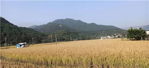 福建泰寧開展農機安全生產及收獲減損技術指導服務工作