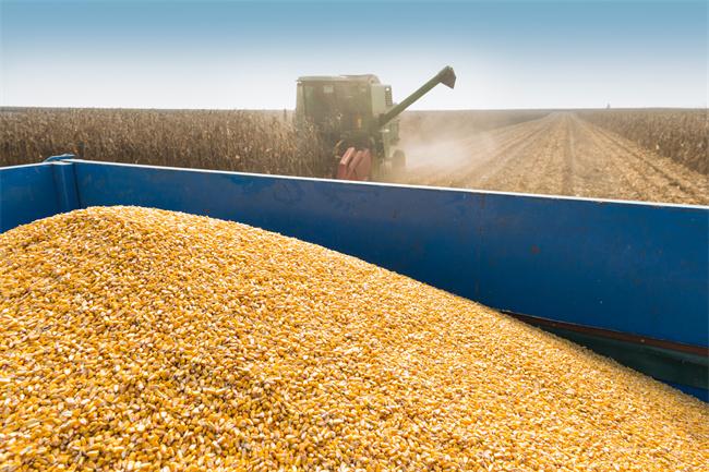 当前全国秋收进度如何?全年粮食是否能丰收?